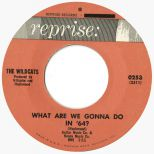 The Wildcats 'What Are We Gonna Do In '64?'
